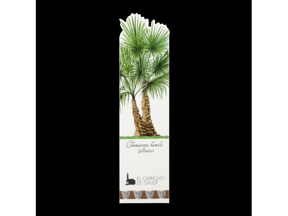 Bookmark - Palm Tree